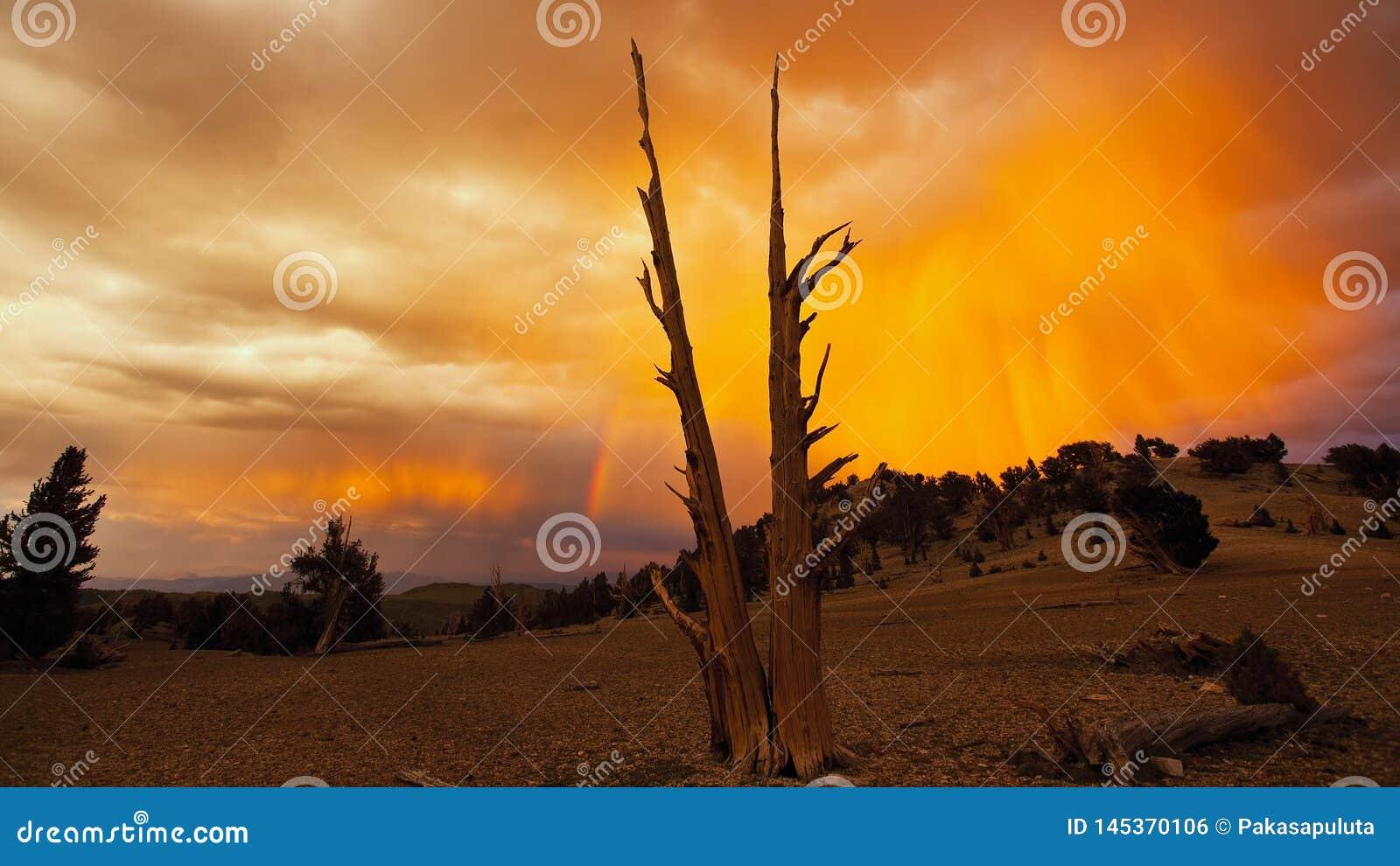 Volcano Desert and Trees