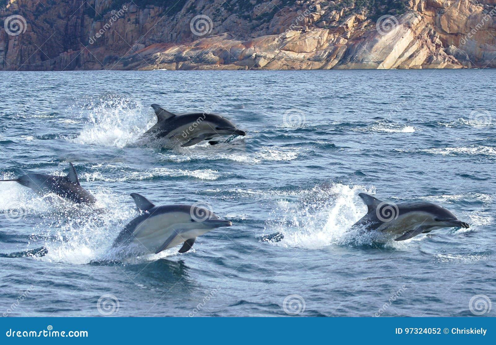 Voler de dauphins