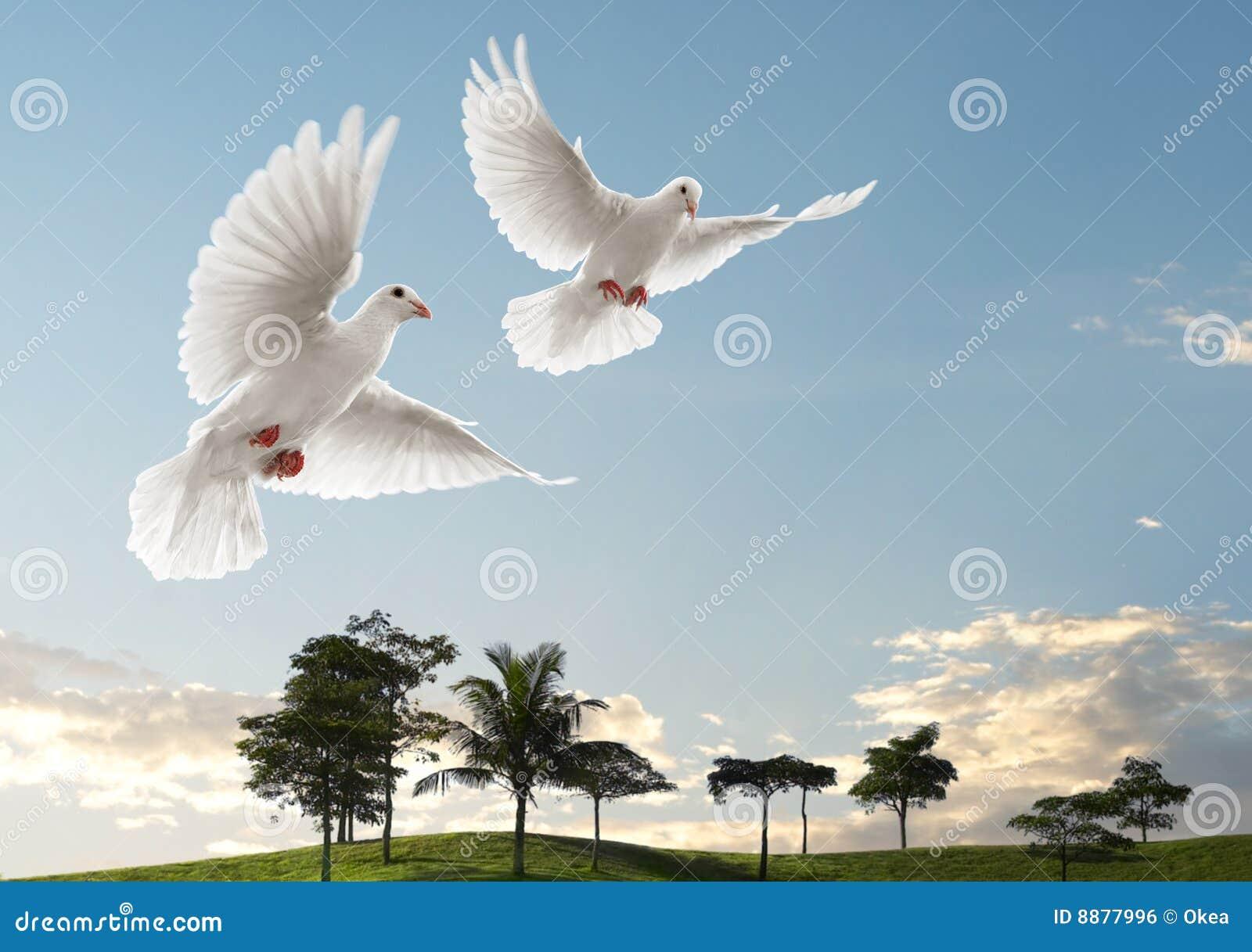 Voler de deux colombes