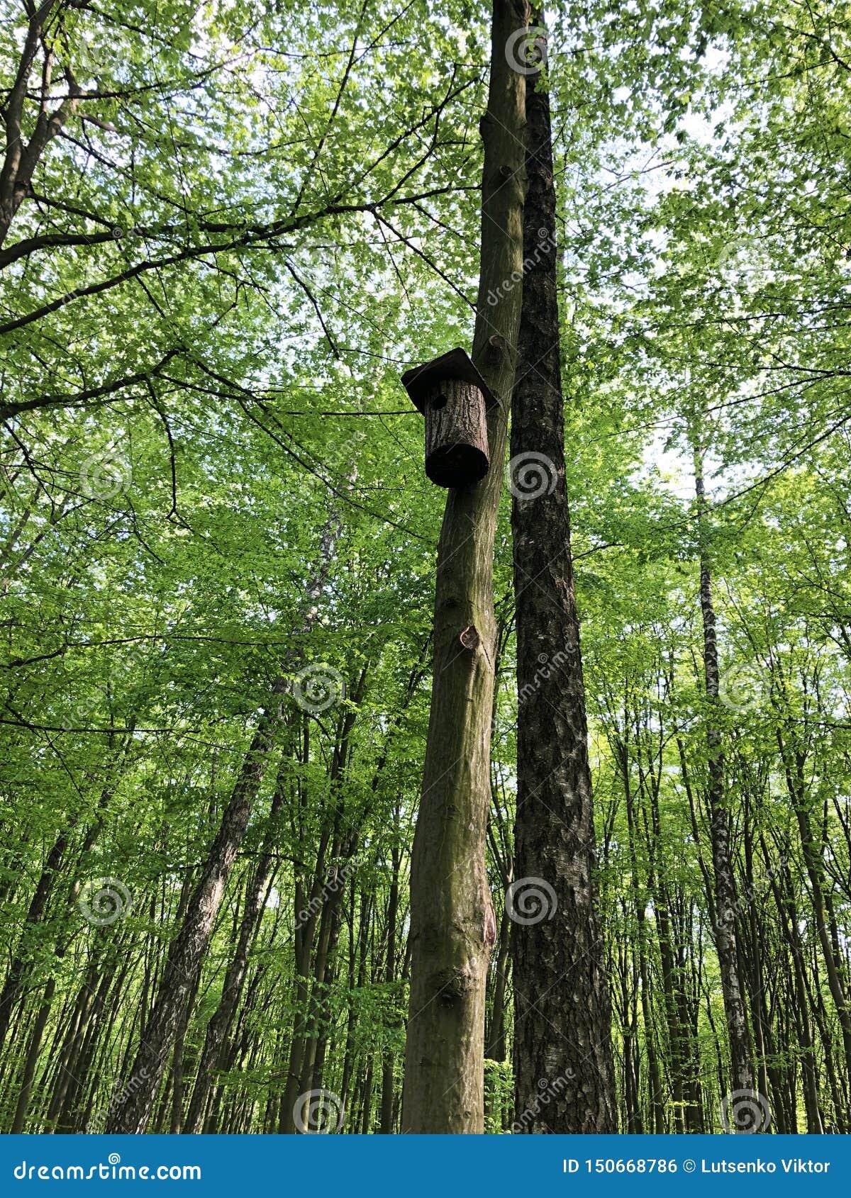 Volière sur un arbre au printemps dans la forêt