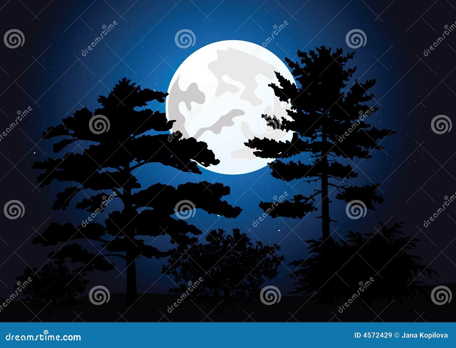 Volle maan in een nachtbos