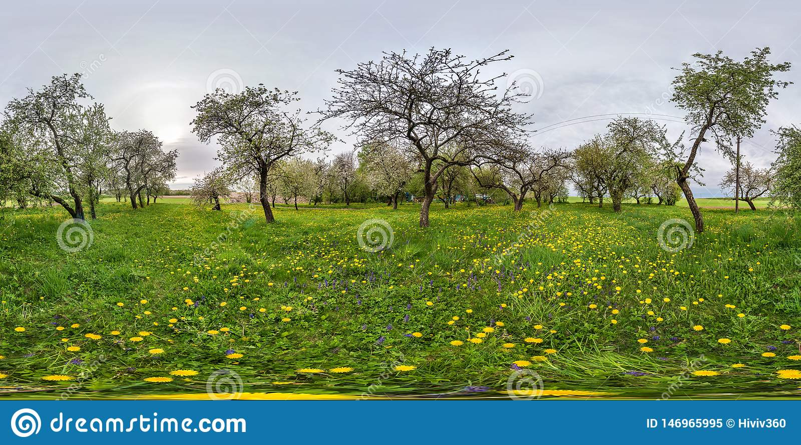 Volledig naadloos sferisch panorama 360 van de hoekgraden mening in de bloeiende boomgaard van de appeltuin met paardebloemen in