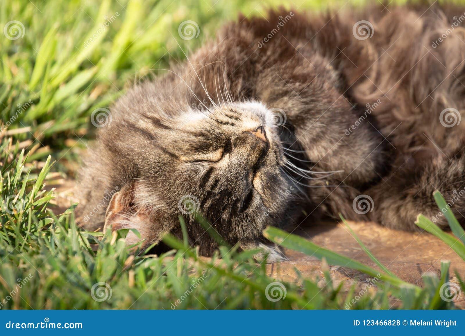 Vollständig entspannte Katze, die morgens eine Sonne des Haares mit grünem Gras im Hintergrund nimmt