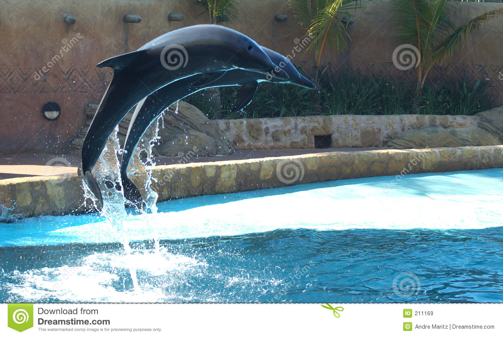 Volo del delfino
