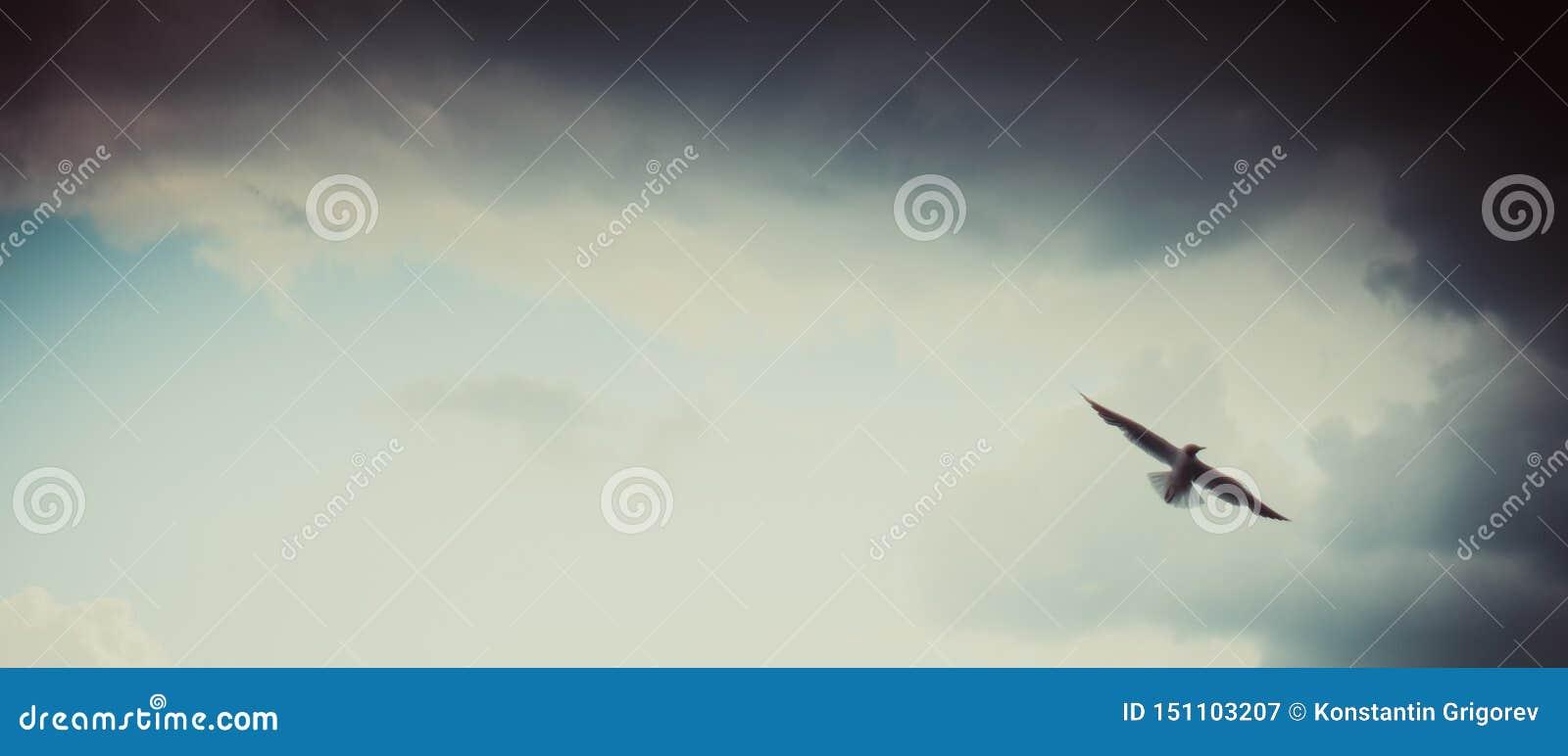 Volo del gabbiano sul bello cielo blu nuvoloso