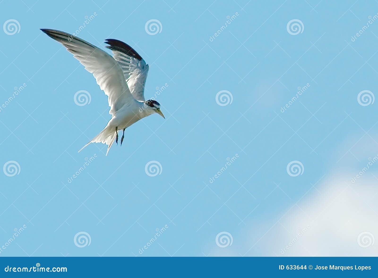 Volo dell uccello
