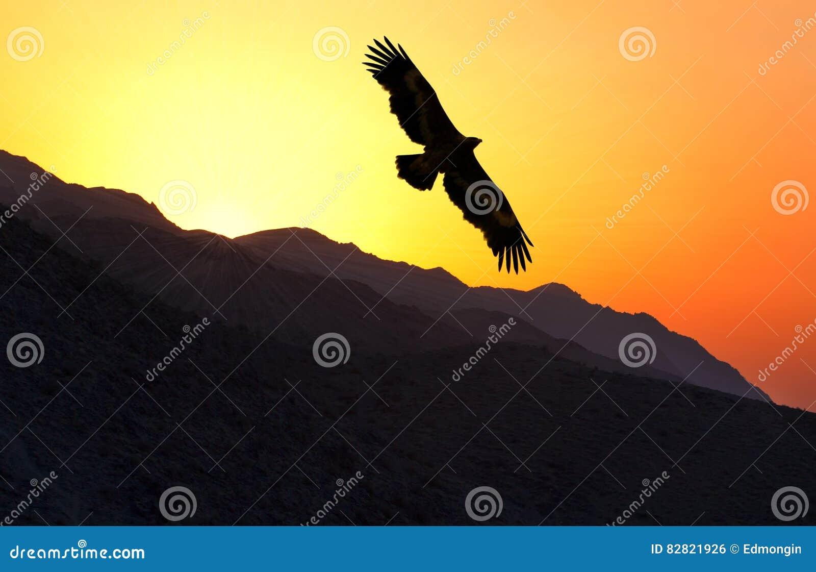Volo di nipalensis di Eagle Aquila della steppa lungo la cresta della montagna