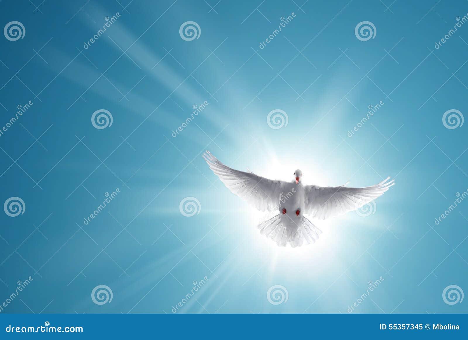 Volo santo bianco della colomba in cielo blu