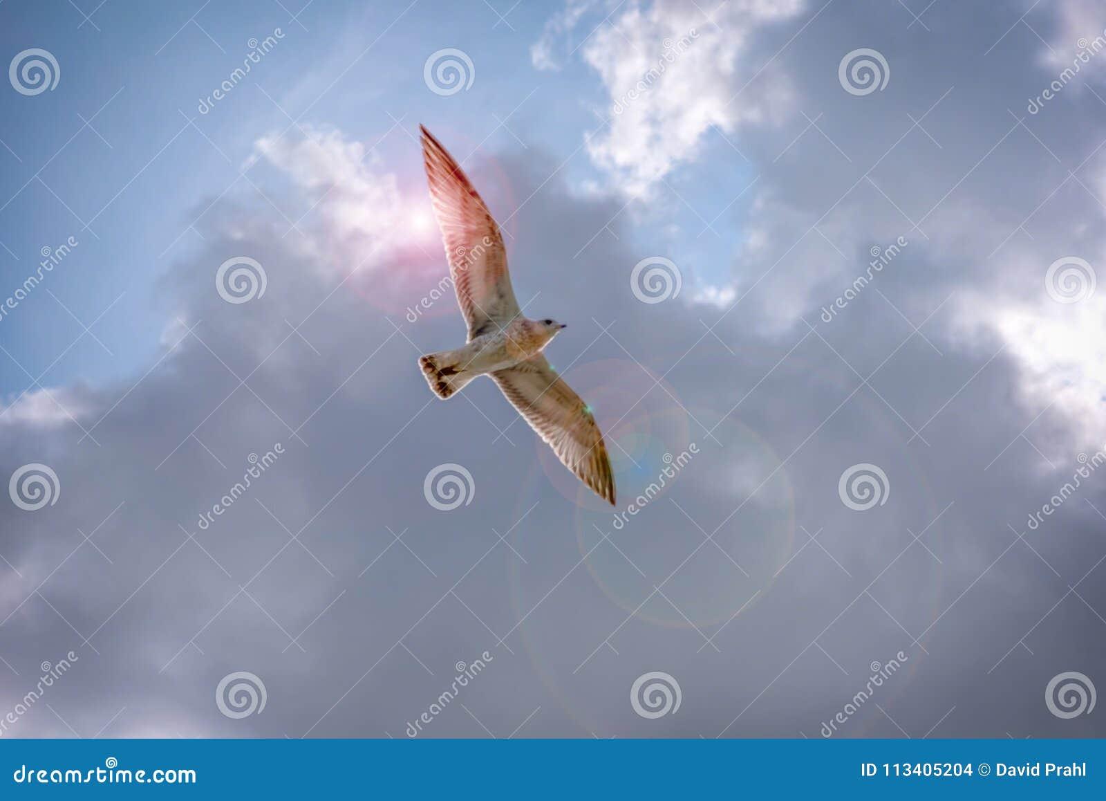 Volo spirituale dell uccello