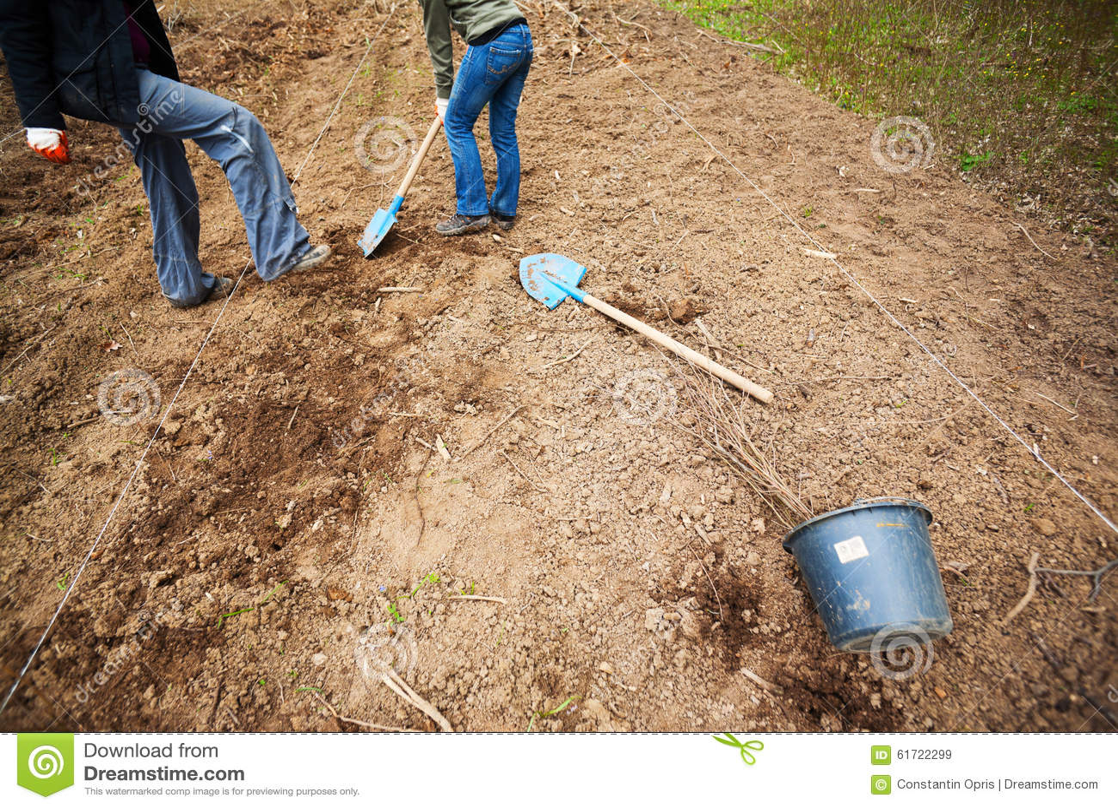 Voluntários que plantam árvores
