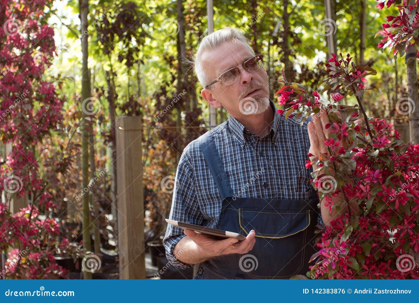 Volwassen tuinman dichtbij de bloemen De handen die de tablet houden In de glazen, een baard, die overall dragen In de tuinwinkel