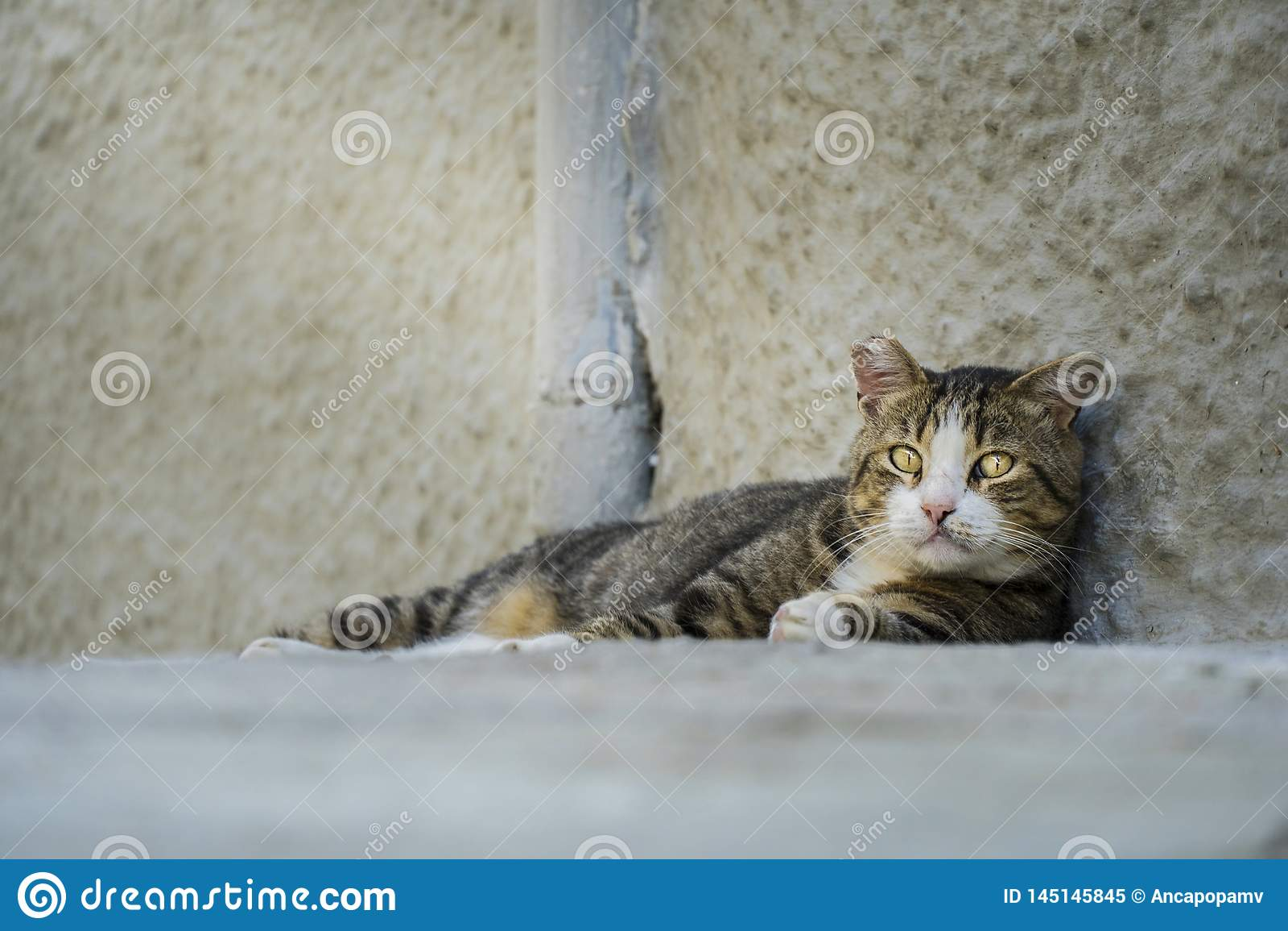 Volwassen verlaten verdwaalde kat die droevig de camera bekijken