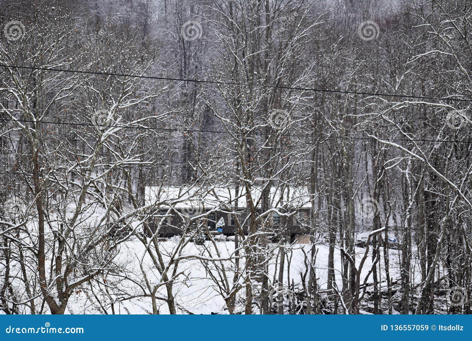 Von West Virginia im Wald leben