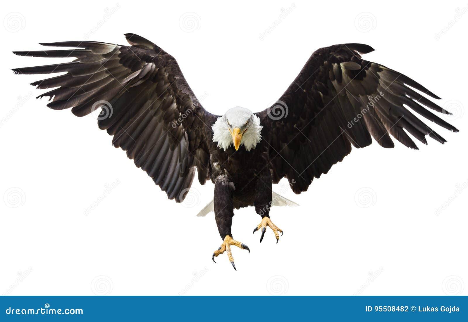 Voo da águia americana com bandeira americana