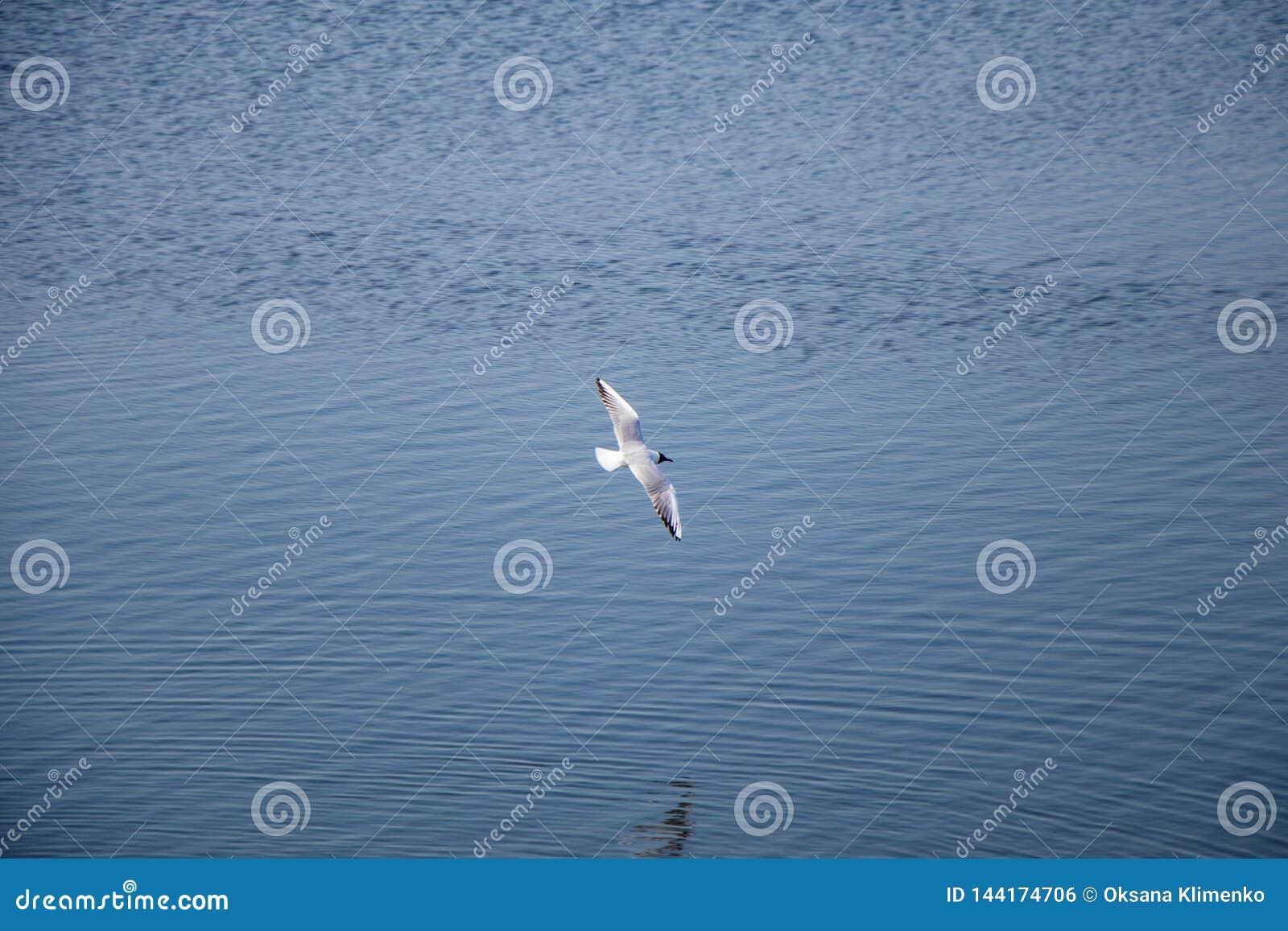 Voo da gaivota de White River sobre a água