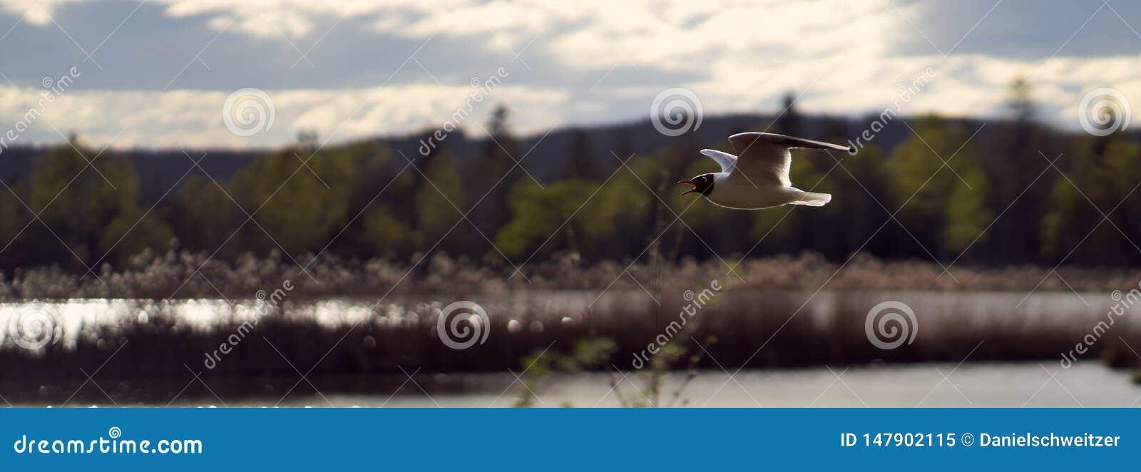 Voo da gaivota em uma linha reta sobre para amarrar