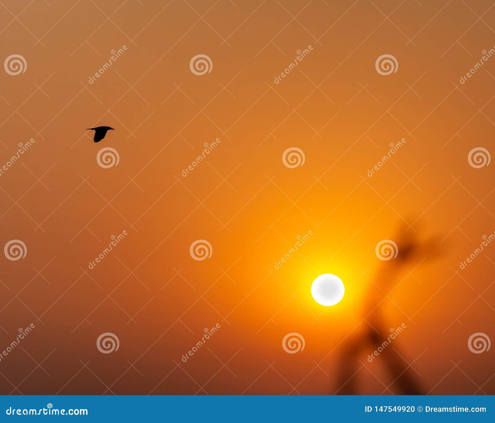 Voo do pássaro através do céu durante o nascer do sol