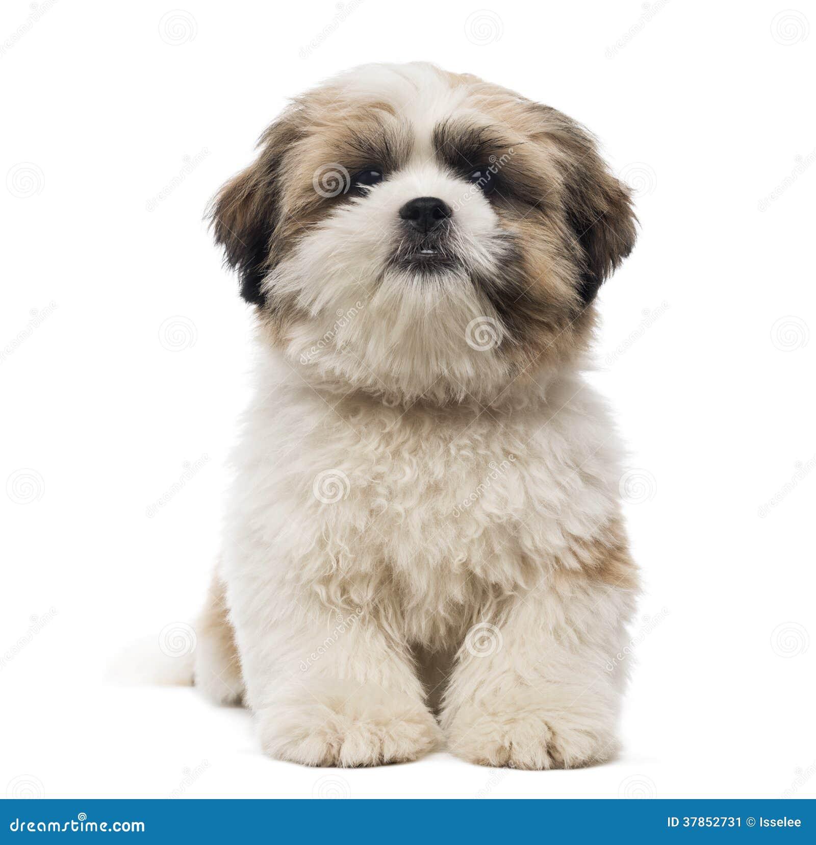Jitsu Dog For Sale