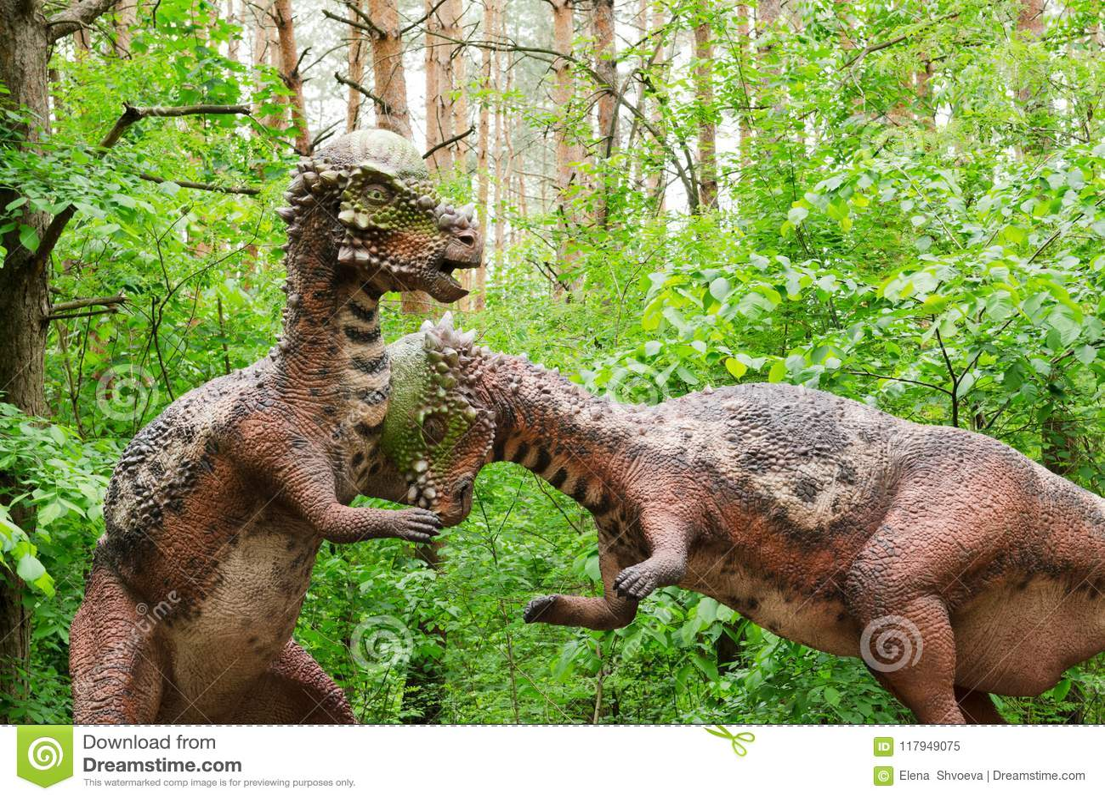 Vorbildlicher Kampf von zwei Dinosauriern Pachycephalosaurus