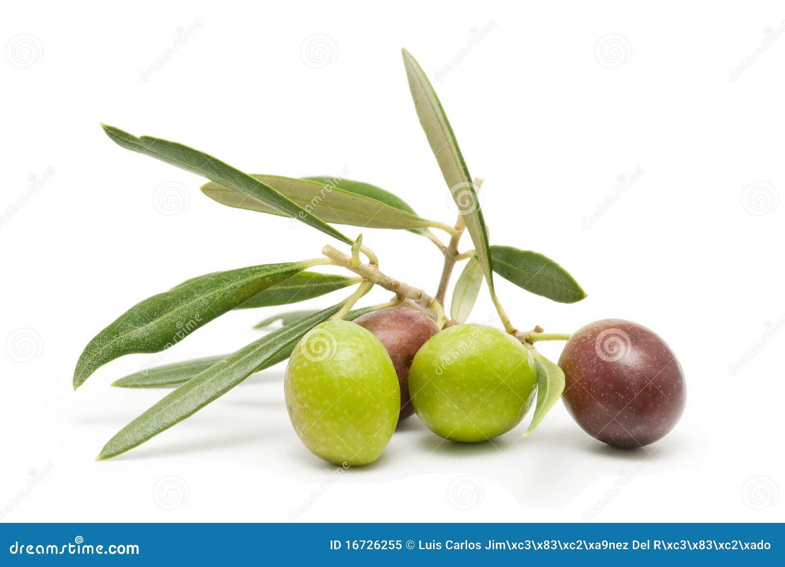 Vorderste Reihe der neuen Oliven