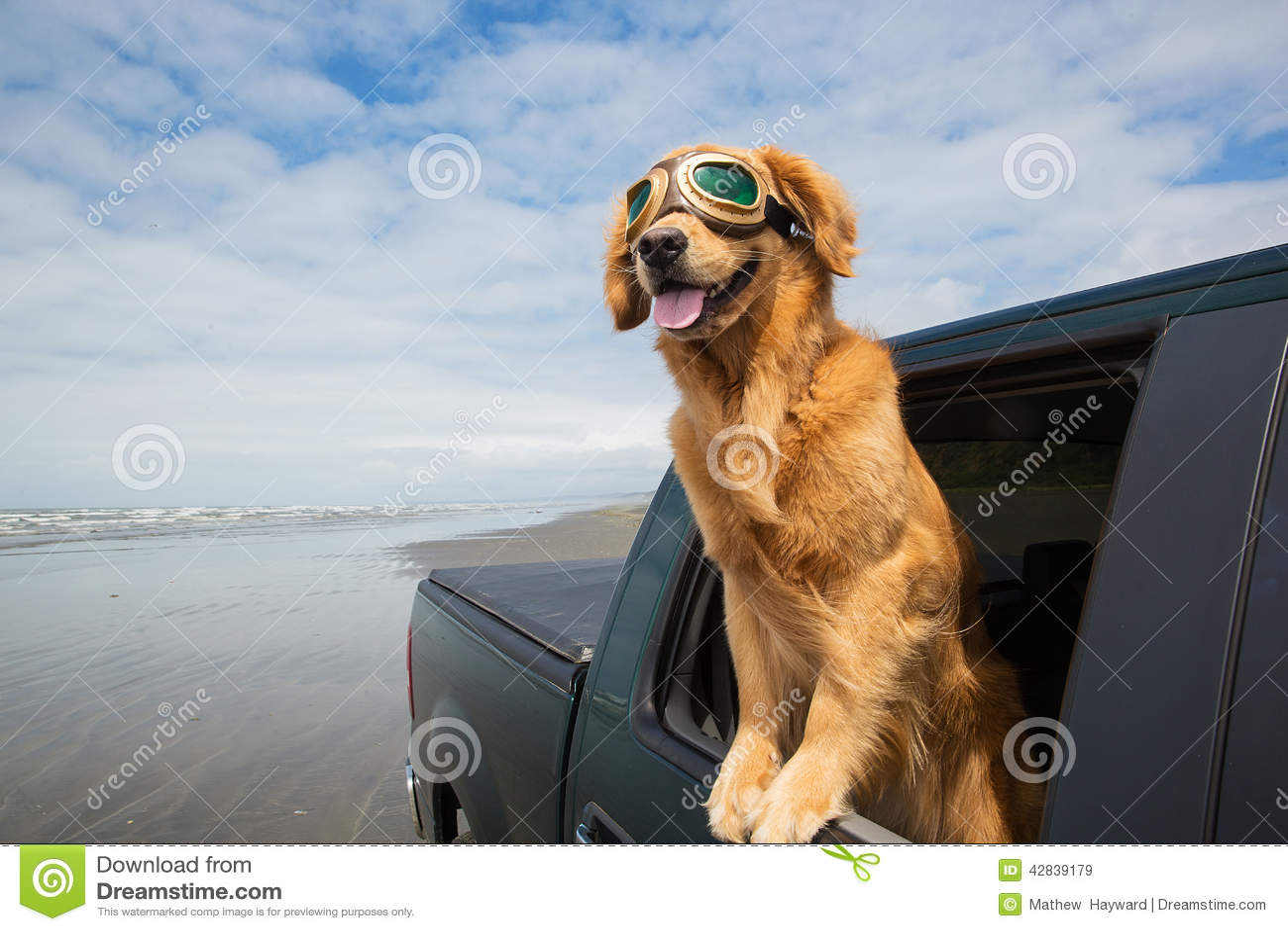Voyage par la route pour un chien