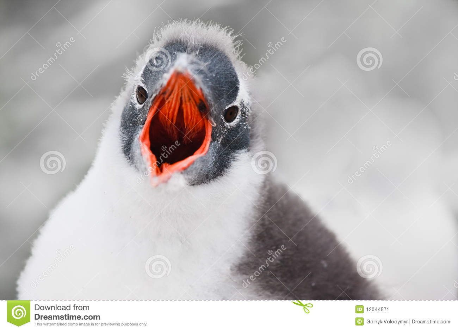 Voz do pinguim
