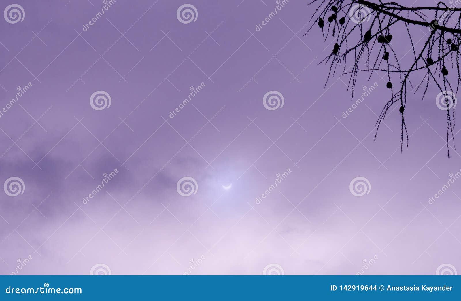 Vrai ciel violet de photo d éclipse solaire avec la branche