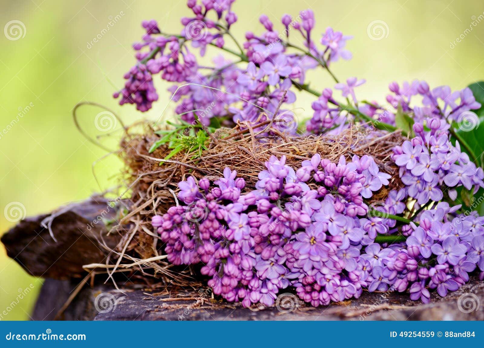 Vrai Nid Avec La Fleur Lilas Image Stock Image Du Duree Vide