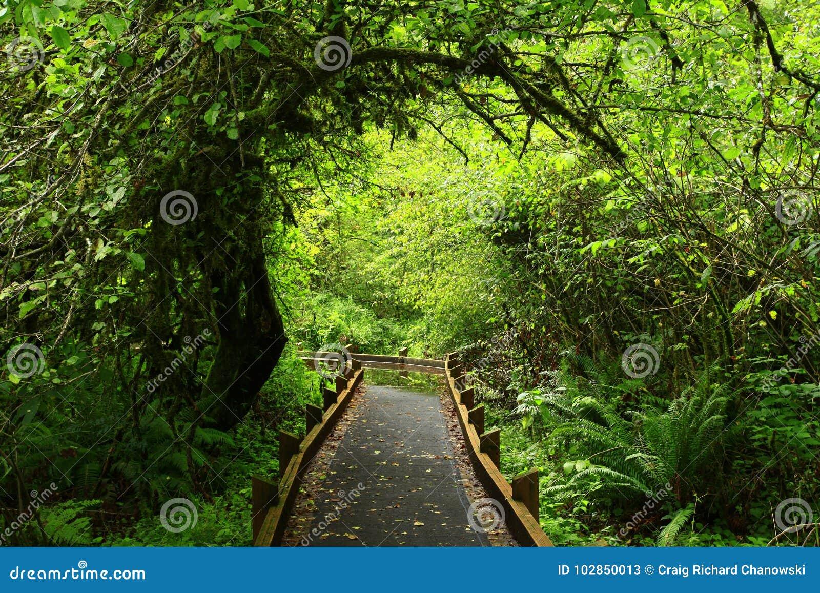 Vreedzaam Noordwesten Forest Trail