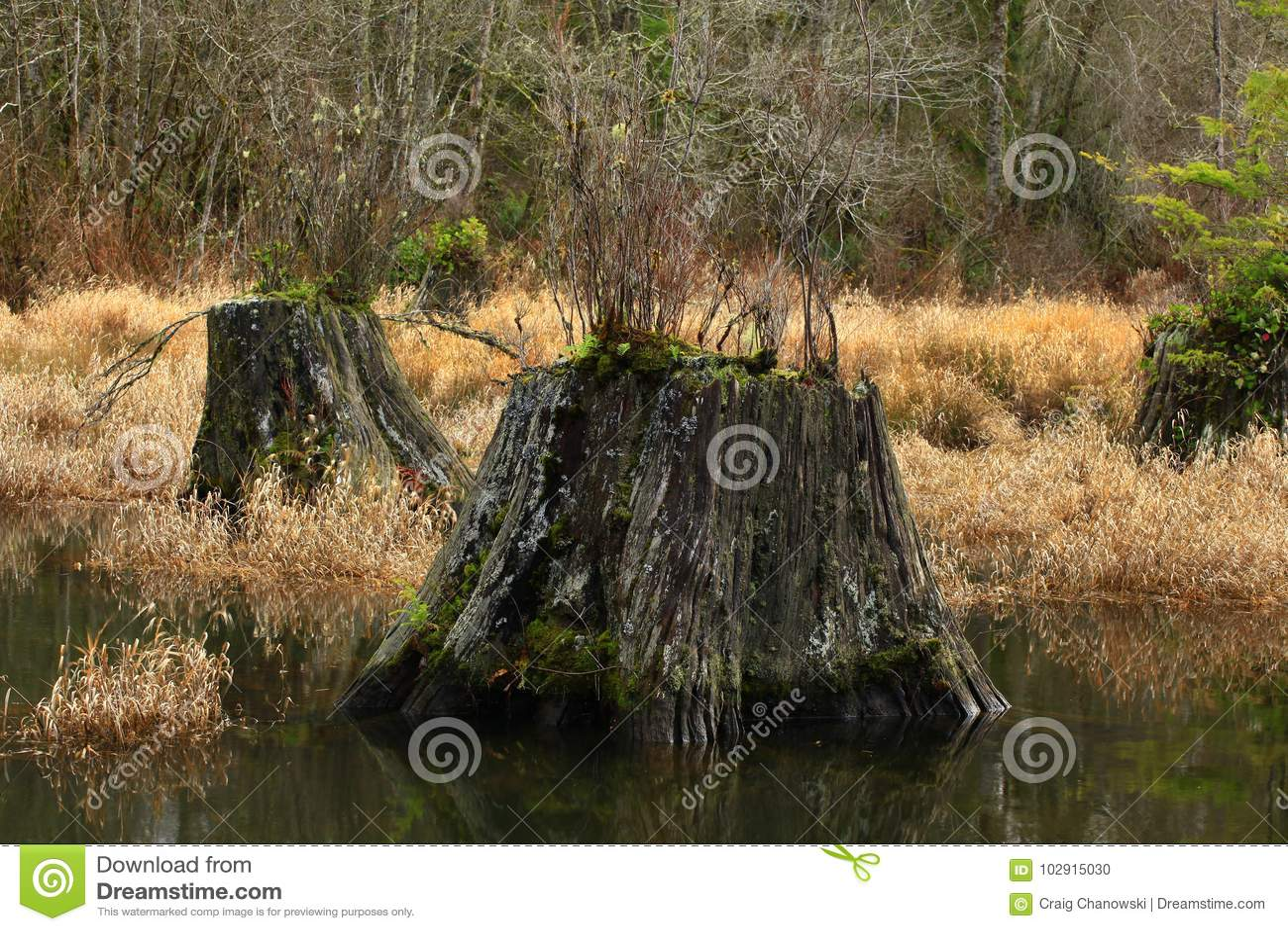 Vreedzaam Noordwestenbos en moerasland
