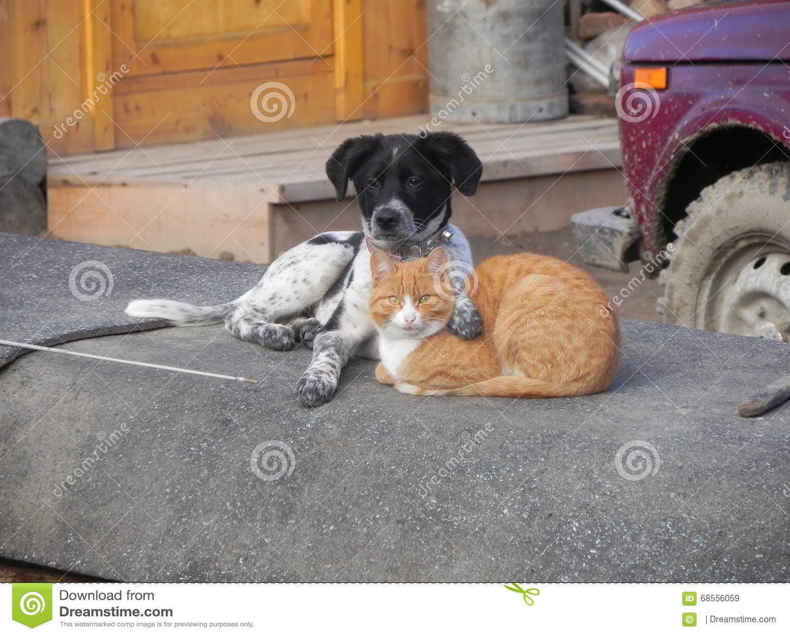 Vriendenkat en hond die rust hebben