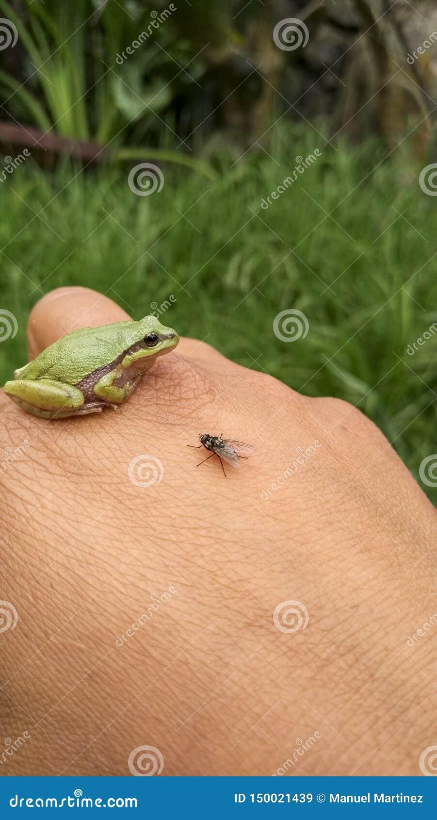Vriendschappelijke dieren van aard dat u bewust moet zijn