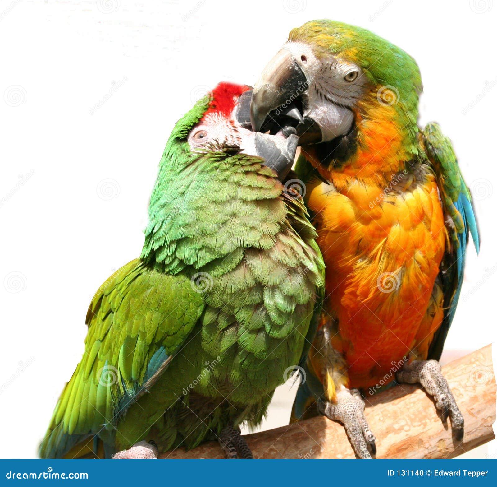 Vriendschappelijke Papegaaien