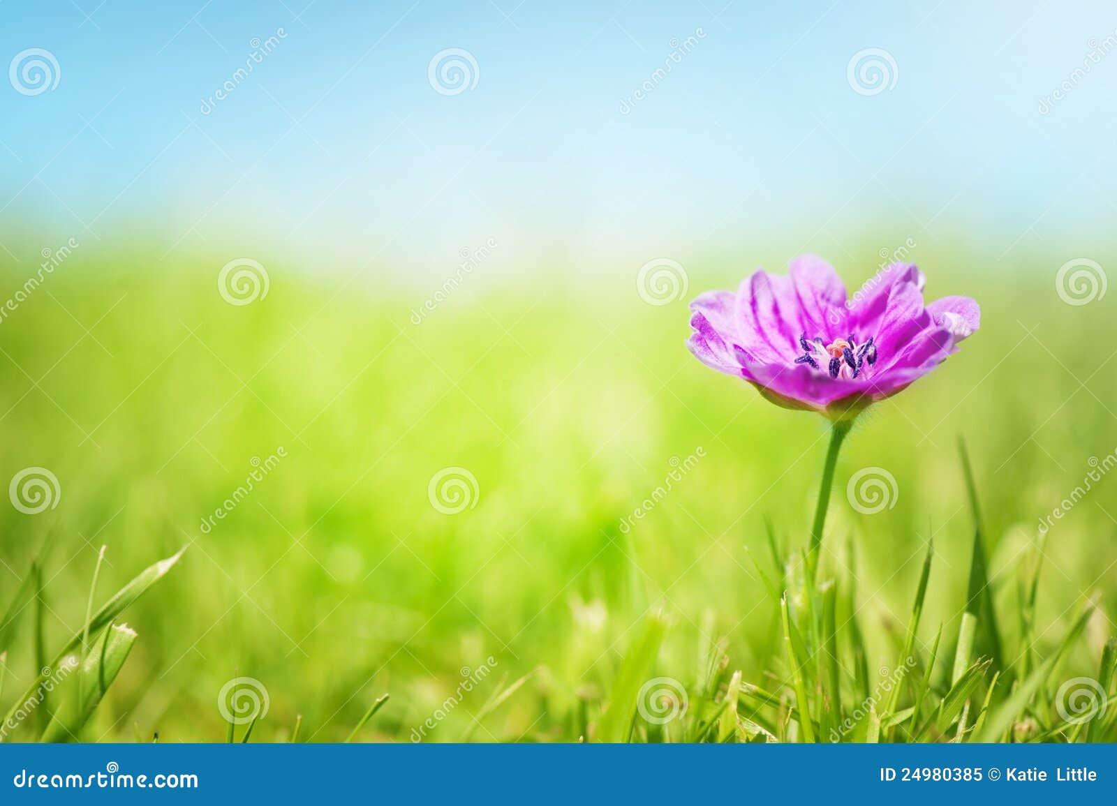 Vrij Roze bloem