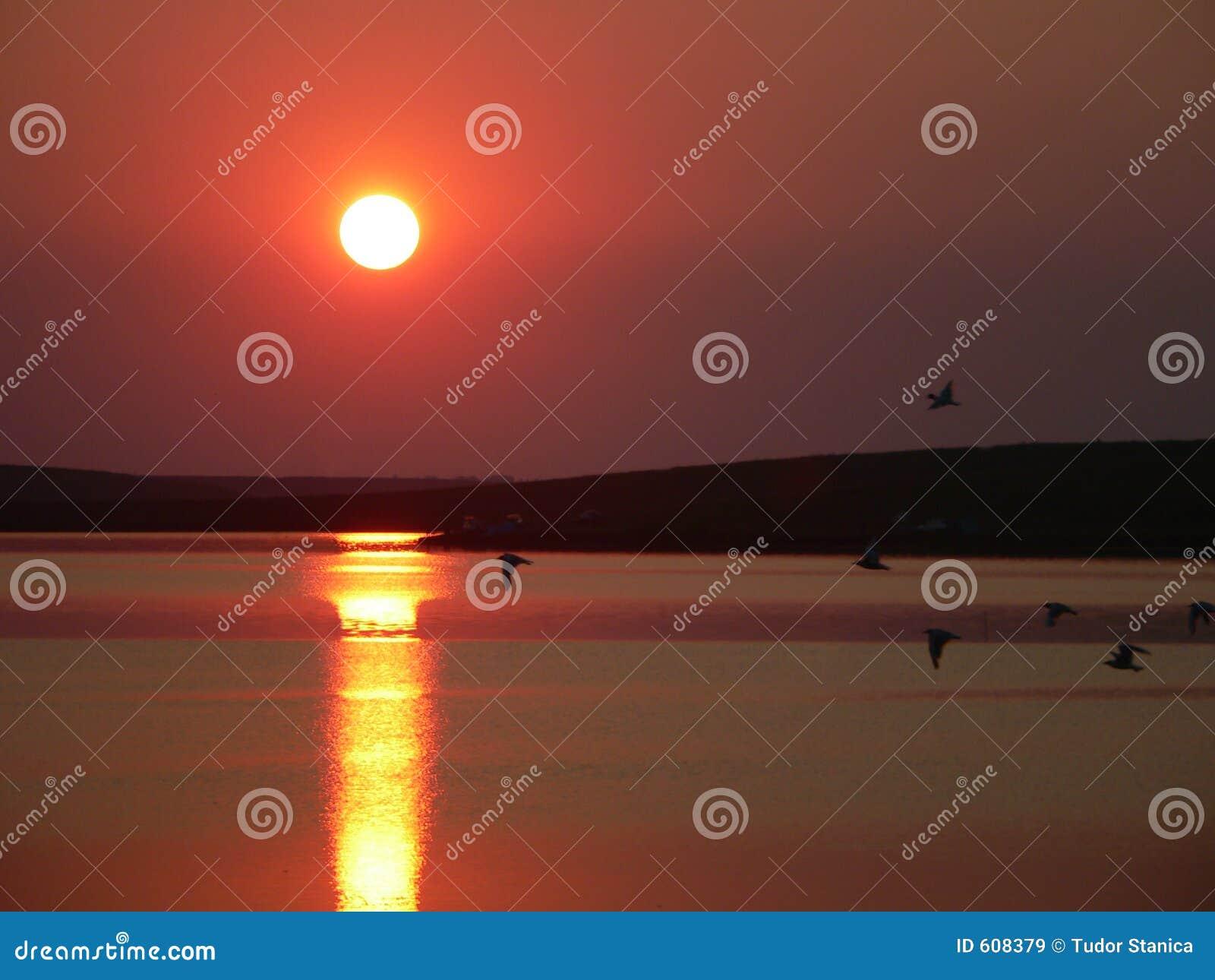 Vrije vogels op de zonsondergang