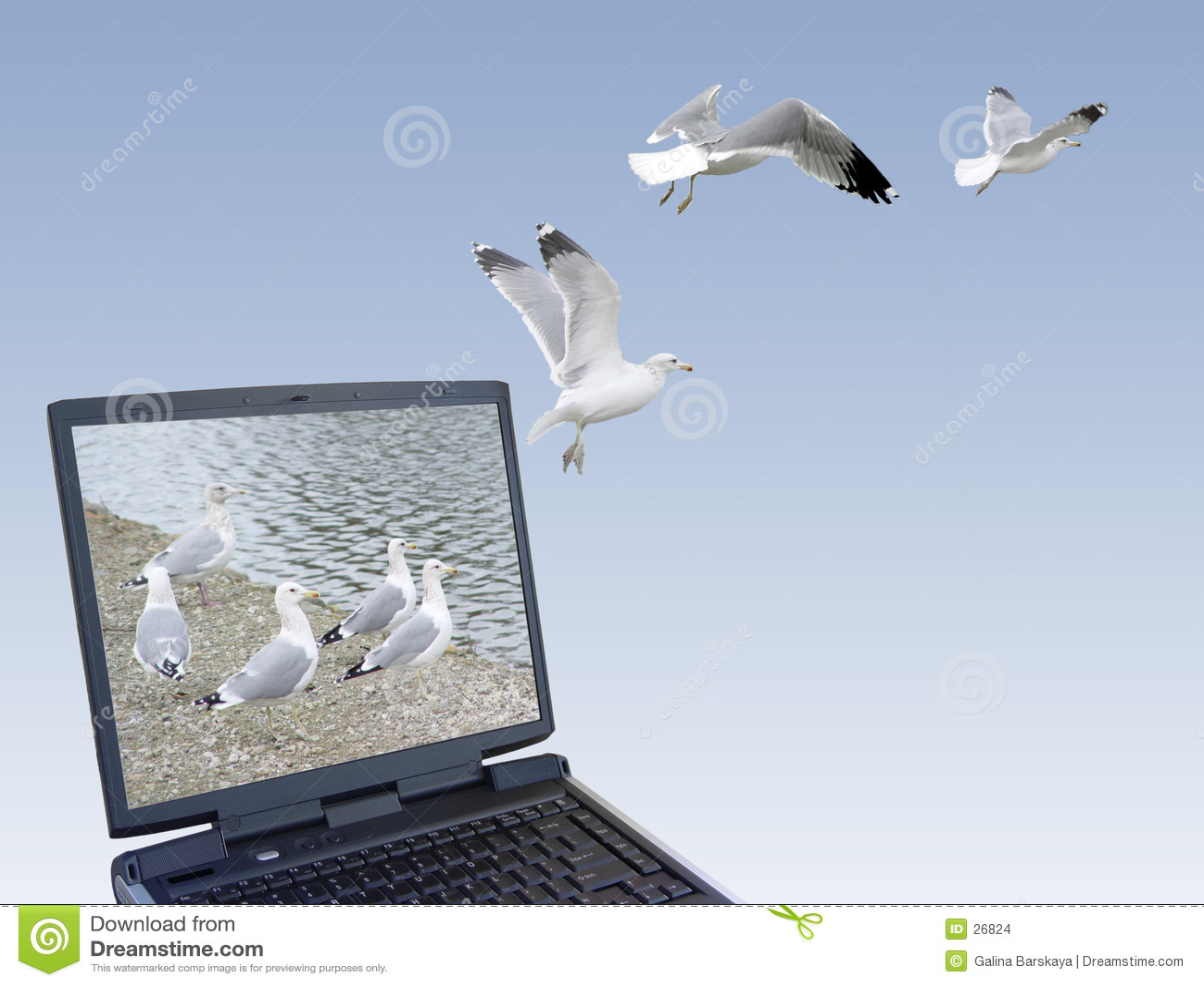 Download Vrijheid stock foto. Afbeelding bestaande uit persoonlijk - 26824