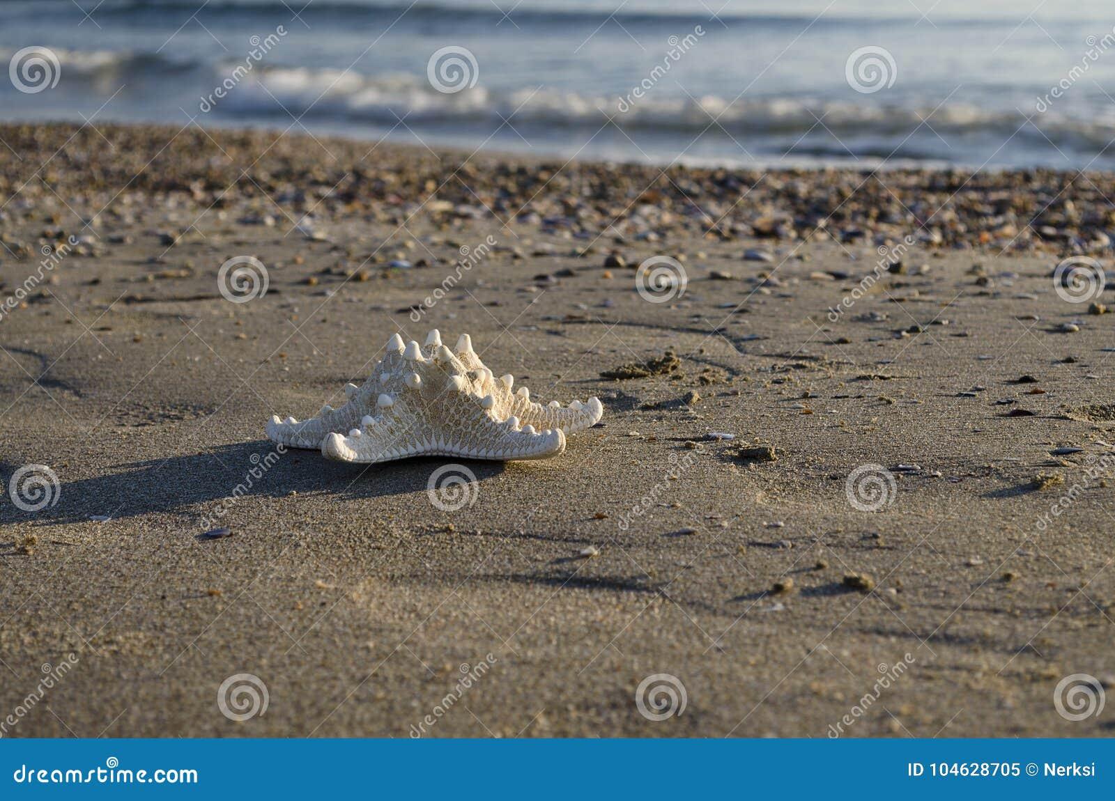 Download Vroeg In De Ochtend Op Het Strand In Pomorie Stock Afbeelding - Afbeelding bestaande uit zeester, klimaat: 104628705