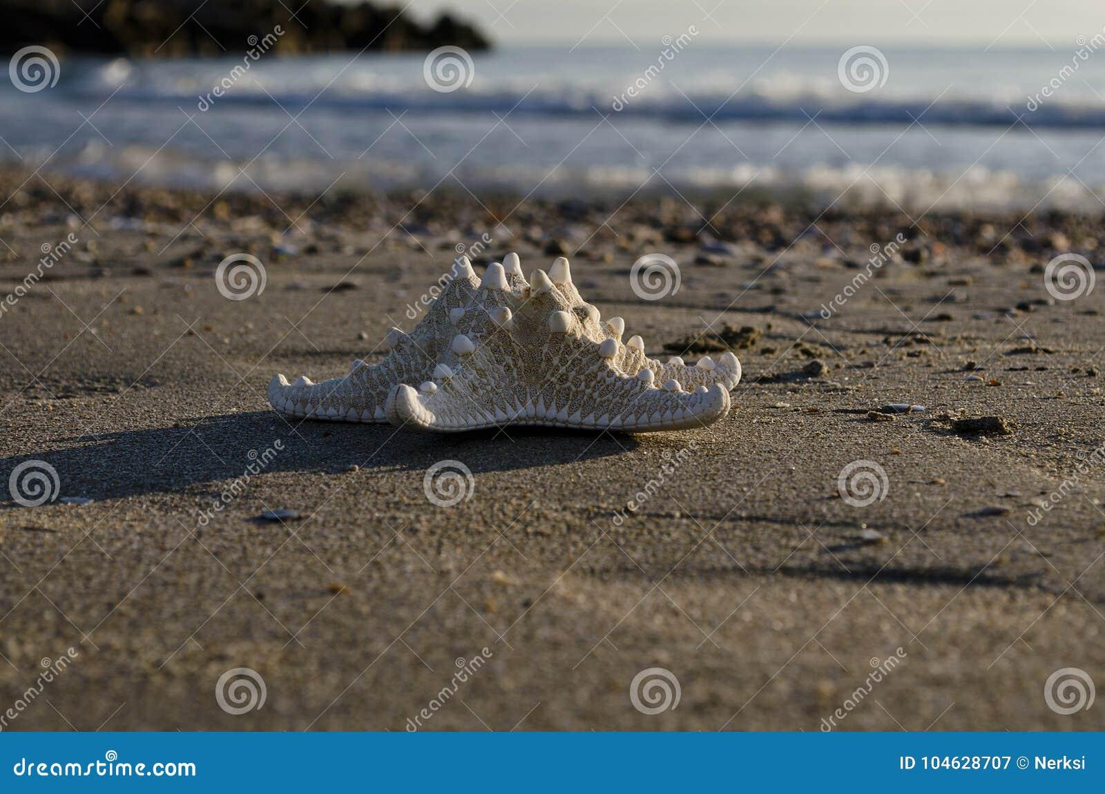 Download Vroeg In De Ochtend Op Het Strand In Pomorie Stock Afbeelding - Afbeelding bestaande uit helder, overzees: 104628707
