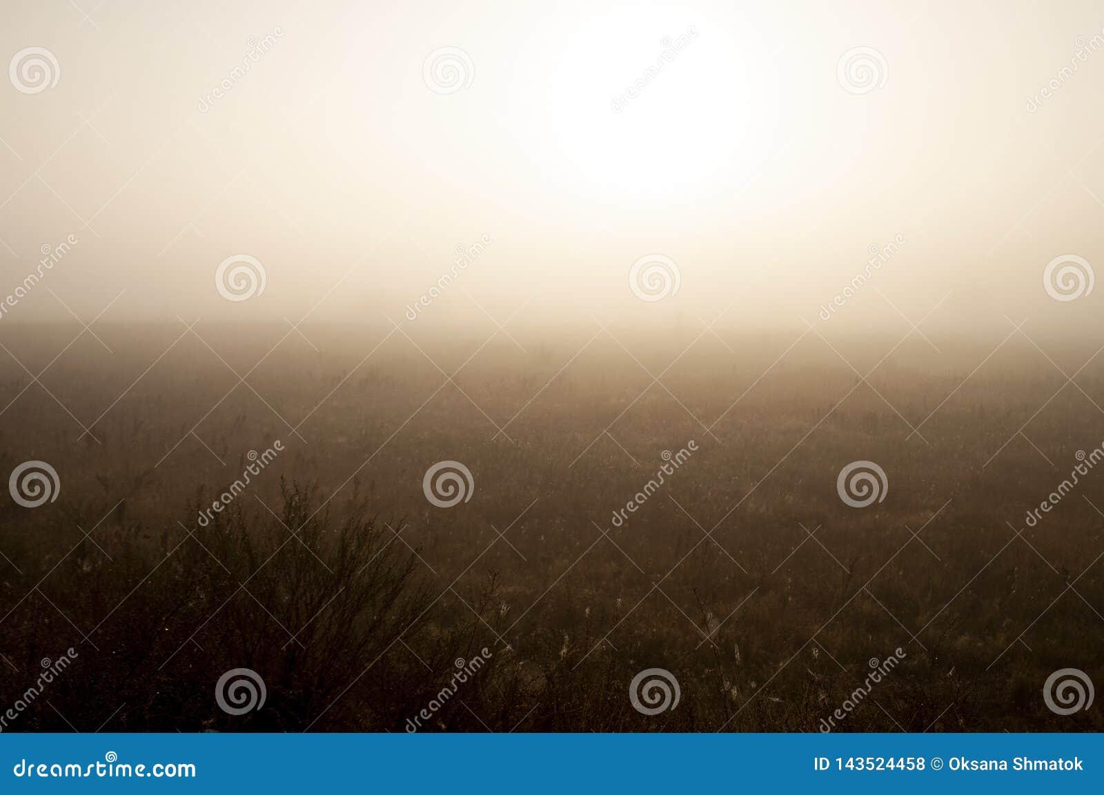 Vroege ochtend op het gebied met de herfstmist en dalingen van water in de lucht Tinten van bruin Niets zou kunnen ver weg zien B
