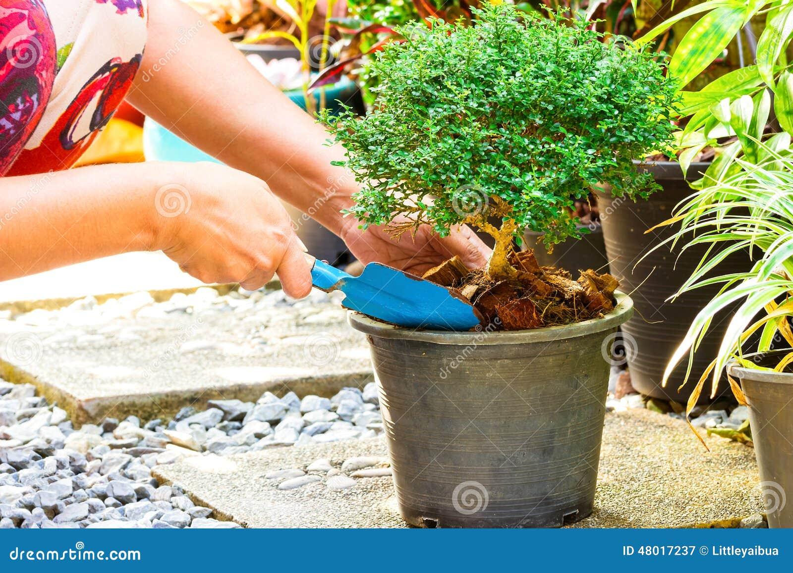Vrouw die een boom in de tuin planten