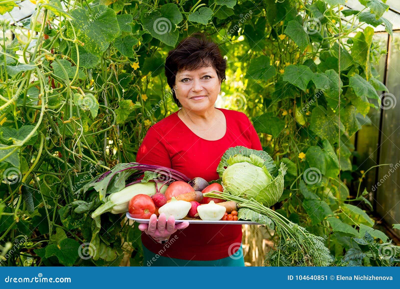Download Vrouw Die In Een Serre Werken Stock Afbeelding - Afbeelding bestaande uit landbouwbedrijf, wijfje: 104640851