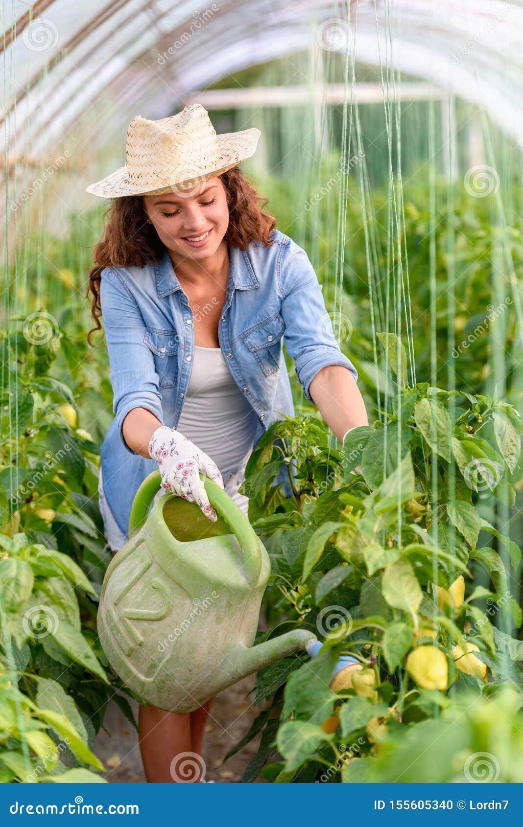 Vrouw die organische groenten kweken bij serre