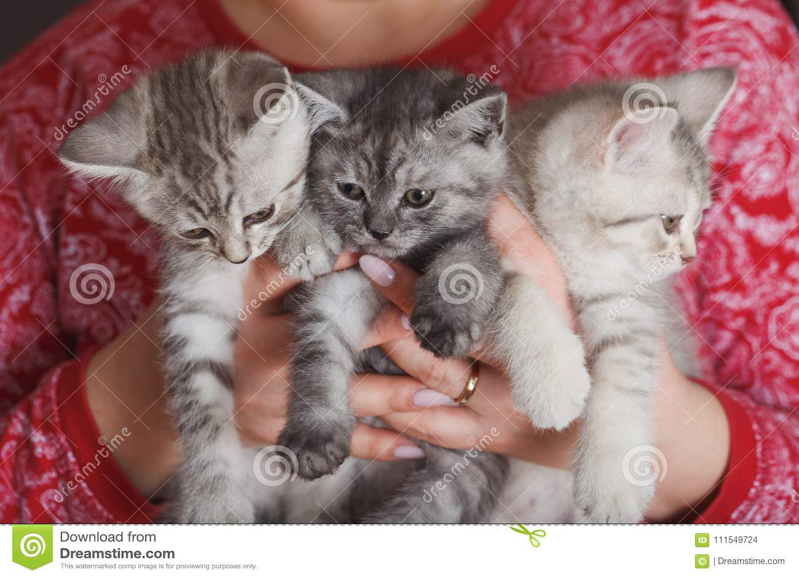 Vrouw in een rood jasje die klein bont grijs katje drie houden