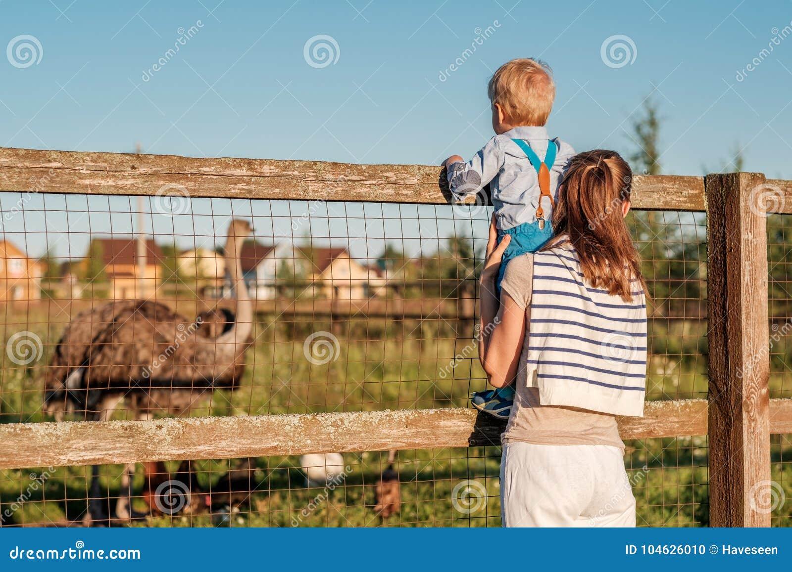Download Vrouw En Kind Die Bij Landbouwbedrijf Struisvogel Bekijken Stock Foto - Afbeelding bestaande uit park, kaukasisch: 104626010