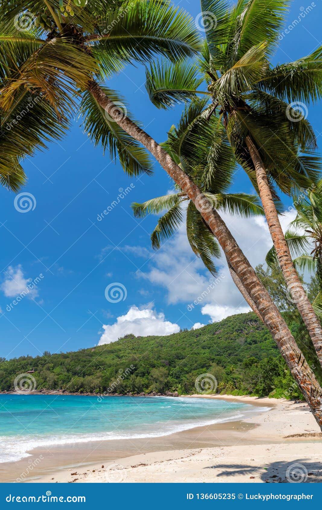 Vrouw op tropisch strand