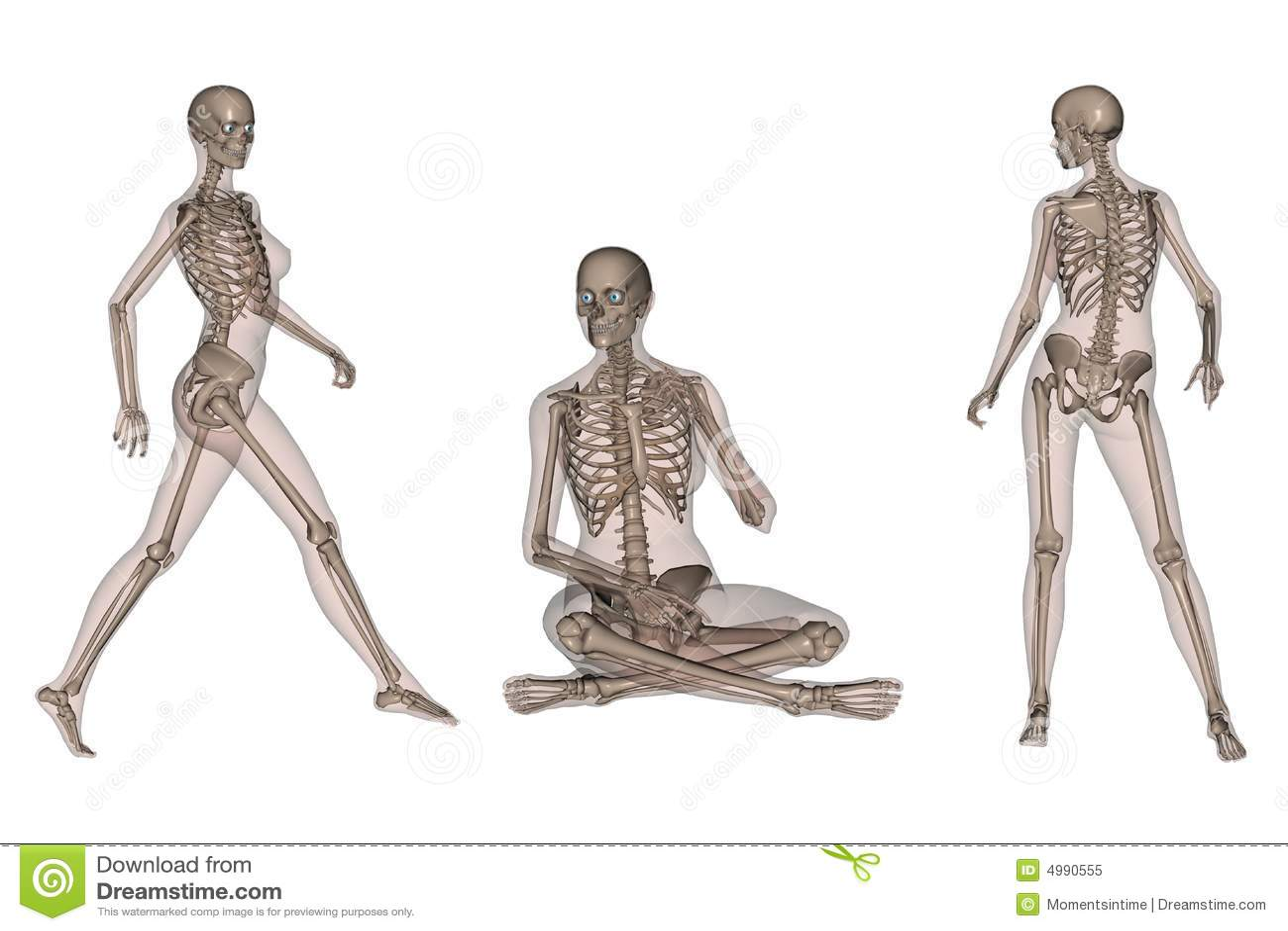 Vrouwelijk Skeletachtig Lichaam