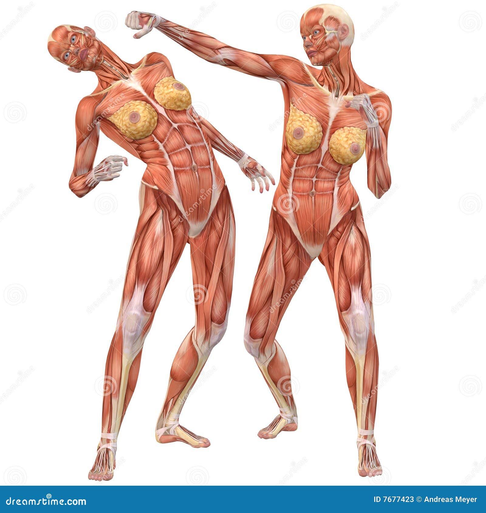 Welp Vrouwelijke De Anatomie-Straat Van Het Menselijke Lichaam Strijd OI-47