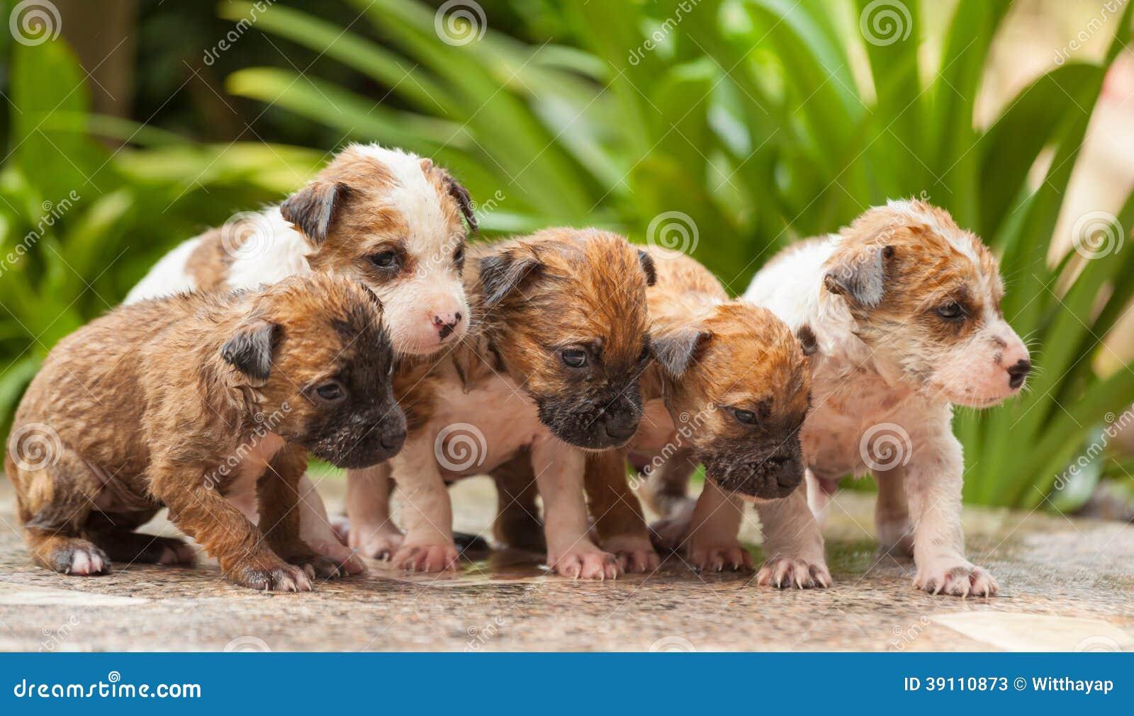 Vrouwelijke het puppyhond van de handwas