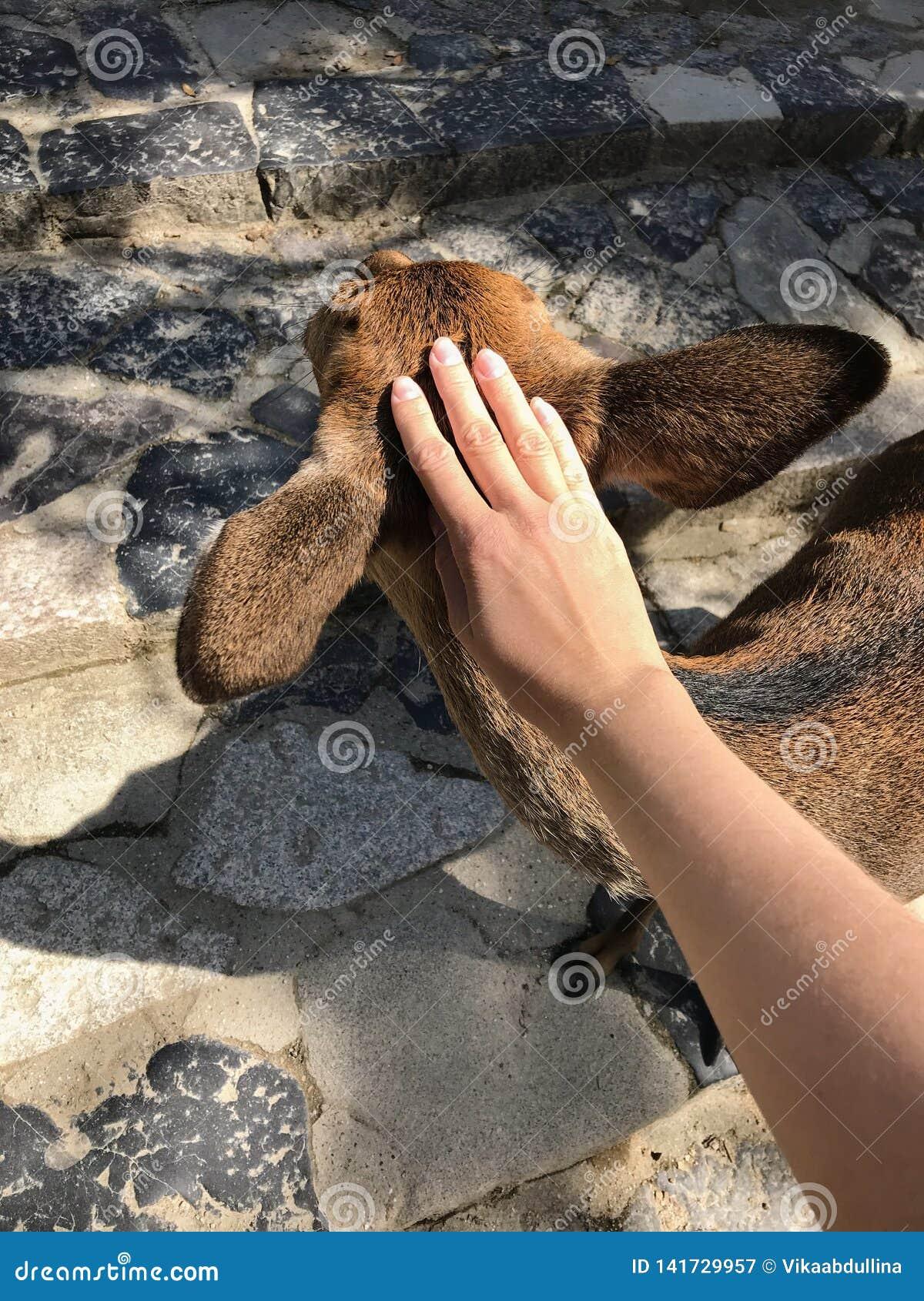 Vrouwelijke meisjeshand die een mooi hert in Nara, Japan petting