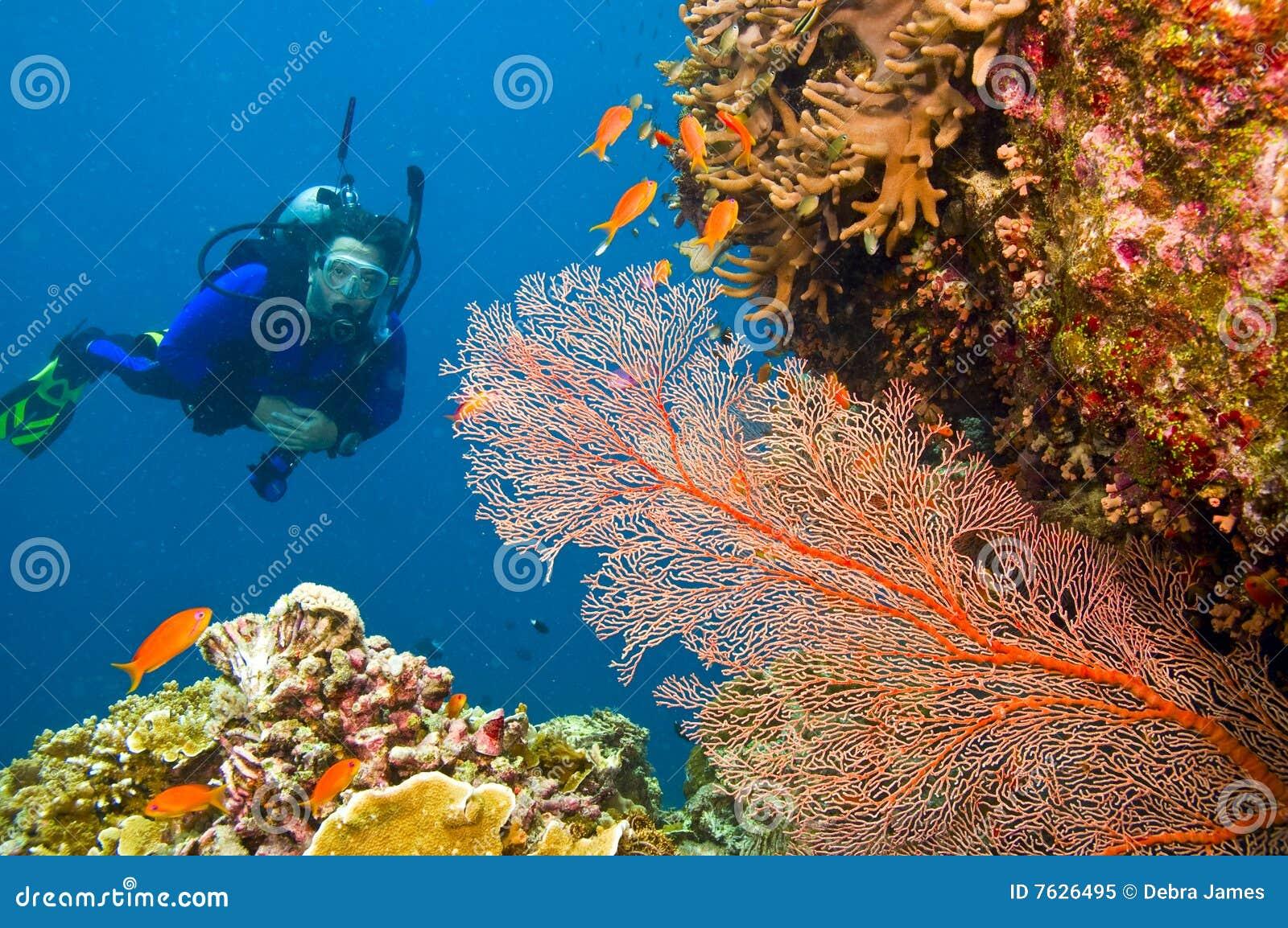 Vrouwelijke scuba-duiker die gorgonian overzeese ventilator bekijkt